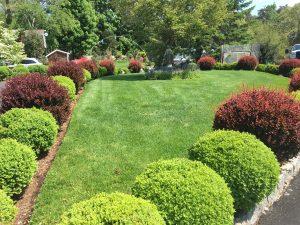 Boxwoods Landscaping - lawn garden landscape