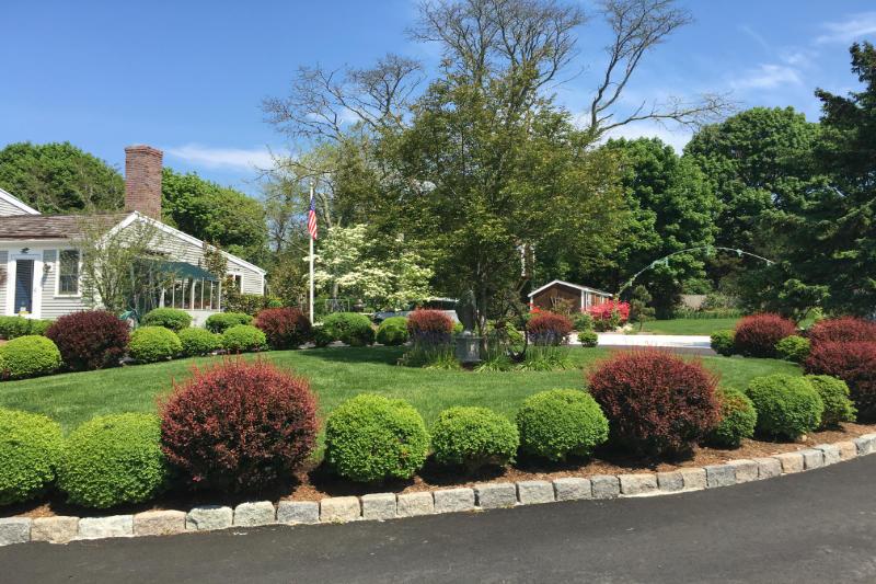 Plants, gardens, shrubs - we prune them all.