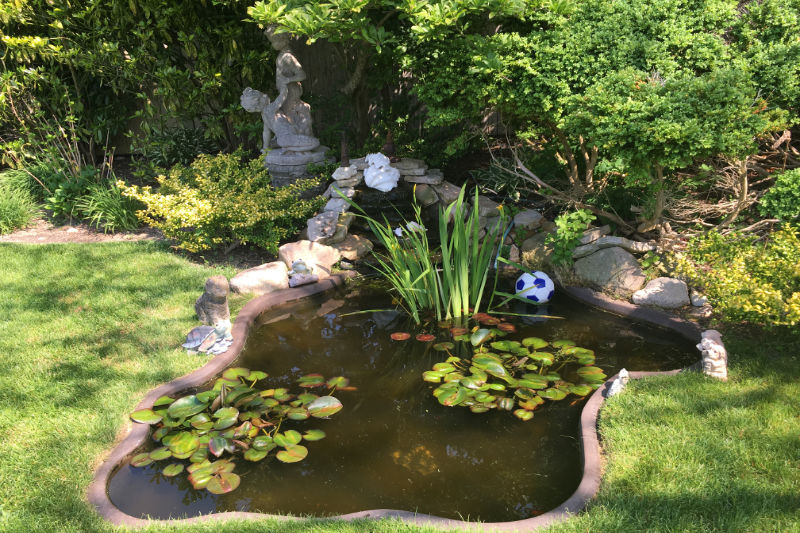 We design and install beautiful ponds and sprinkler systems